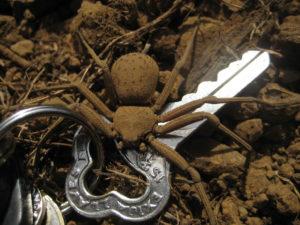 интересные факты о Песчаном пауке