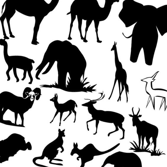 необычные факты о животных